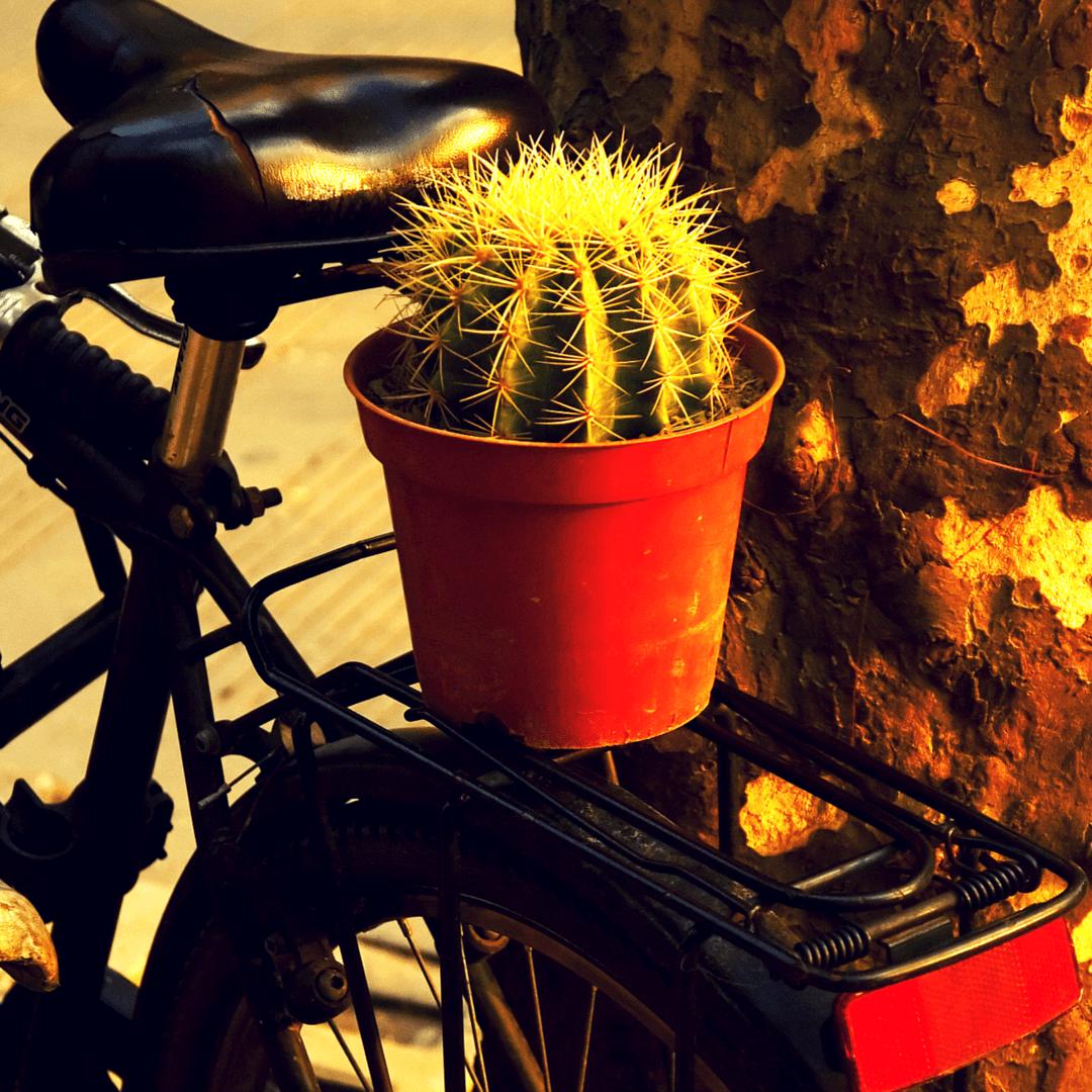 We Love Tucson's Fun Community of Cyclists, Best Bike Cities