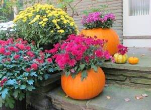 Garden Mums in a Pumpkin Planter